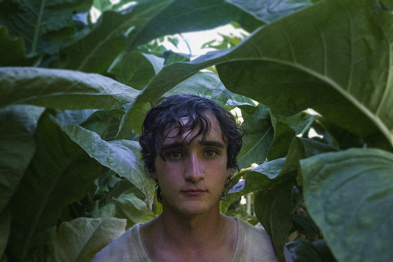 Happy as Lazzaro: Miedo al lobo